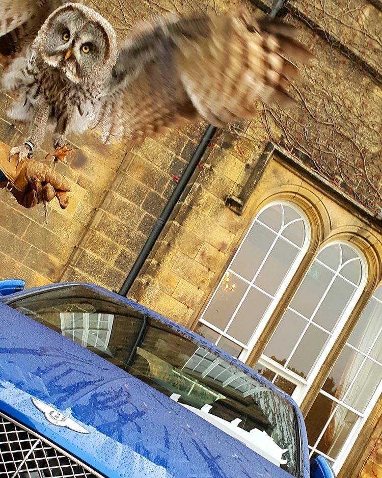 Swinton Park Owl Bird